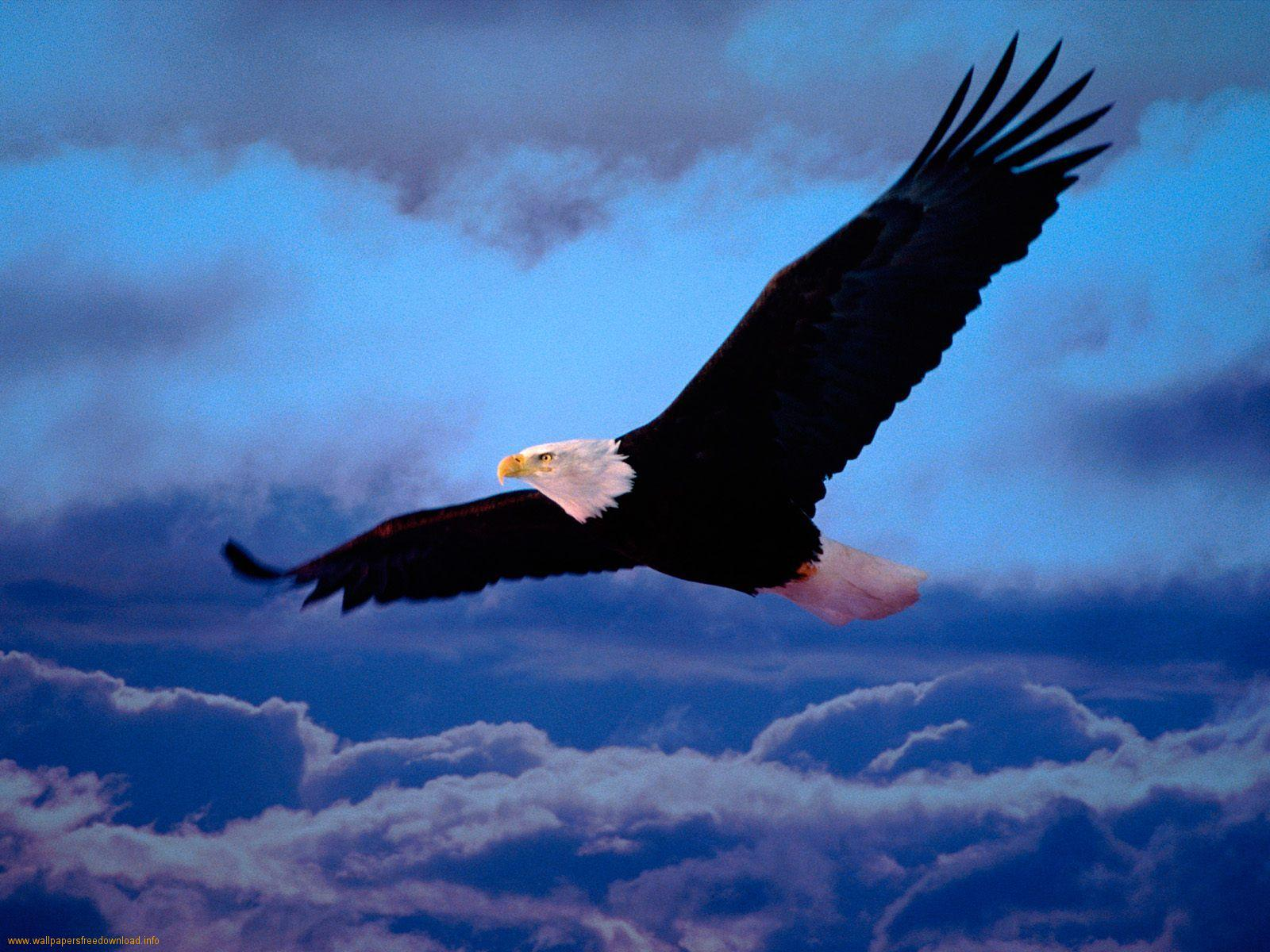 http://miraclesofthequran.persiangig.com/Zistshenasi/flying-eagle_4-1.jpeg